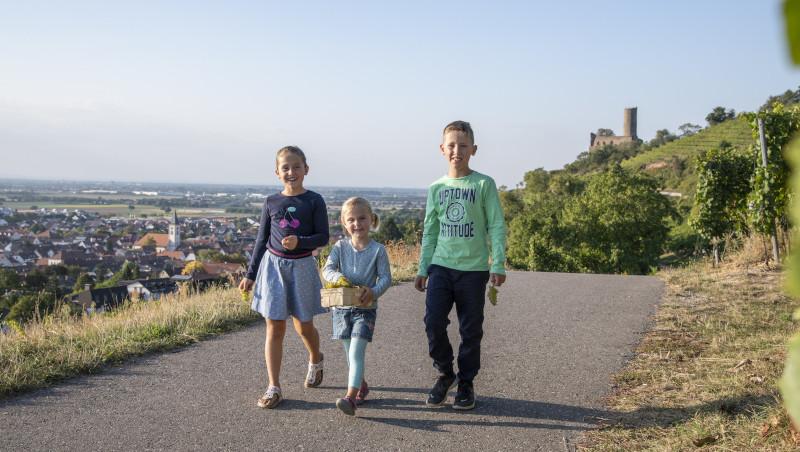 Drei Kinder laufen auf einem Feldweg in den Weinbergen. Die Strahlenburg im Hintergrund auf einem Berg.